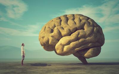 5 уловок нашего мозга, которые мешают эффективно работать и учиться